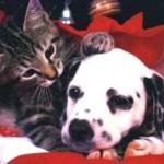 495243 Fotos de cachorros e gatos fofos 07 150x150 Fotos de cachorros e gatos fofos