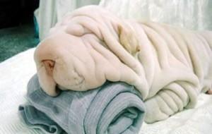Fotos de cachorros e gatos fofos 13