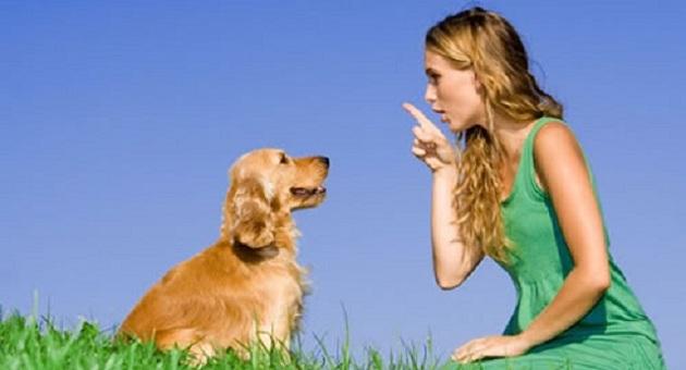 496794 Aprenda como adestrar seu cachorro Ciúme entre cães, como resolver