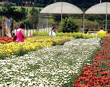 497492 Expoflora 2012 em Holambra programação ingressos.2 Expoflora 2012 em Holambra: programação, ingressos