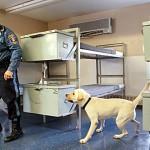 498741 O labrador é usado a serviço da população. 150x150 Fotos de cães da raça labrador