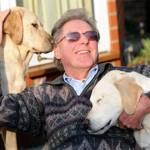 498741 São cães bem inteligentes. 150x150 Fotos de cães da raça labrador