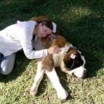 499608 fotos de caes da raça sao bernardo 20 150x150 Fotos de cães da raça São Bernardo