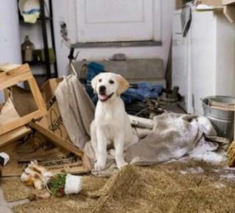 499612 Raças de cães mais difíceis de adestrar.1 Raças de cães mais difíceis de adestrar