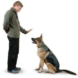 499612 Raças de cães mais difíceis de adestrar.2 Raças de cães mais difíceis de adestrar