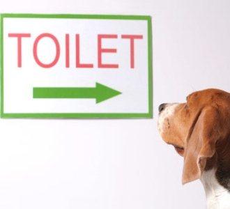 499612 Raças de cães mais difíceis de adestrar.3 Raças de cães mais difíceis de adestrar