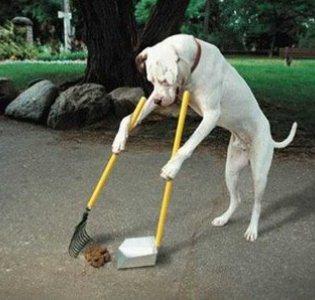 499612 Raças de cães mais difíceis de adestrar.4 Raças de cães mais difíceis de adestrar