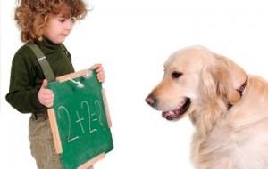 Raças de cães mais difíceis de adestrar.1