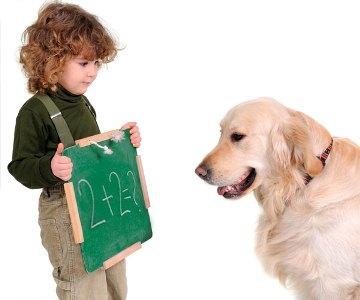499612 Raças de cães mais difíceis de adestrar.5 Raças de cães mais difíceis de adestrar