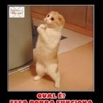 500046 fotos e montagens de gatos para facebook 1 150x150 Fotos e montagens de gatos para facebook