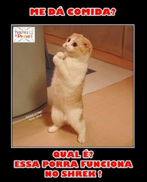 500046 fotos e montagens de gatos para facebook 1 Fotos e montagens de gatos para facebook