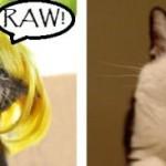 500046 fotos e montagens de gatos para facebook 12 150x150 Fotos e montagens de gatos para facebook