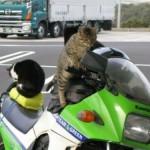 500046 fotos e montagens de gatos para facebook 13 150x150 Fotos e montagens de gatos para facebook