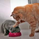 500046 fotos e montagens de gatos para facebook 14 150x150 Fotos e montagens de gatos para facebook