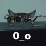 500046 fotos e montagens de gatos para facebook 16 150x150 Fotos e montagens de gatos para facebook