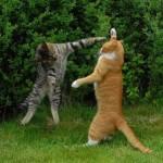 500046 fotos e montagens de gatos para facebook 17 150x150 Fotos e montagens de gatos para facebook