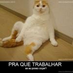 500046 fotos e montagens de gatos para facebook 19 150x150 Fotos e montagens de gatos para facebook