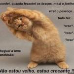 500046 fotos e montagens de gatos para facebook 21 150x150 Fotos e montagens de gatos para facebook