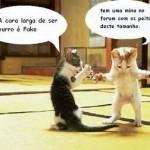 500046 fotos e montagens de gatos para facebook 23 150x150 Fotos e montagens de gatos para facebook
