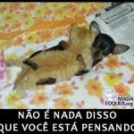 500046 fotos e montagens de gatos para facebook 24 150x150 Fotos e montagens de gatos para facebook