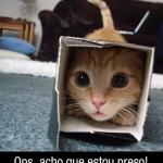 500046 fotos e montagens de gatos para facebook 25 150x150 Fotos e montagens de gatos para facebook