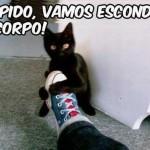 500046 fotos e montagens de gatos para facebook 26 150x150 Fotos e montagens de gatos para facebook