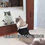 500046 fotos e montagens de gatos para facebook 28 150x150 Fotos e montagens de gatos para facebook