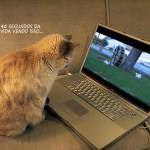 500046 fotos e montagens de gatos para facebook 29 150x150 Fotos e montagens de gatos para facebook