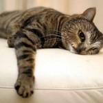500046 fotos e montagens de gatos para facebook 3 150x150 Fotos e montagens de gatos para facebook