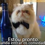 500046 fotos e montagens de gatos para facebook 30 150x150 Fotos e montagens de gatos para facebook