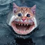 500046 fotos e montagens de gatos para facebook 4 150x150 Fotos e montagens de gatos para facebook