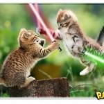 500046 fotos e montagens de gatos para facebook 5 150x150 Fotos e montagens de gatos para facebook