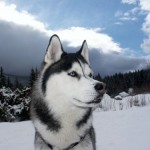 500175 fotos de caes de raça grande 10 150x150 Fotos de cães de raça grande