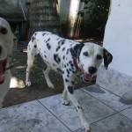 500175 fotos de caes de raça grande 14 150x150 Fotos de cães de raça grande