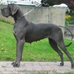 500175 fotos de caes de raça grande 24 150x150 Fotos de cães de raça grande