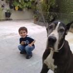 500175 fotos de caes de raça grande 25 150x150 Fotos de cães de raça grande