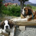 500175 fotos de caes de raça grande 28 150x150 Fotos de cães de raça grande
