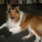 500175 fotos de caes de raça grande 34 150x150 Fotos de cães de raça grande