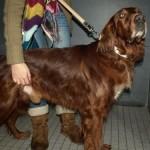 500175 fotos de caes de raça grande 36 150x150 Fotos de cães de raça grande