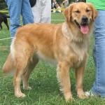 500175 fotos de caes de raça grande 6 150x150 Fotos de cães de raça grande