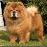 500175 fotos de caes de raça grande 8 150x150 Fotos de cães de raça grande