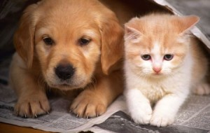 DogUrbano: site de compras coletivas para cães e gatos
