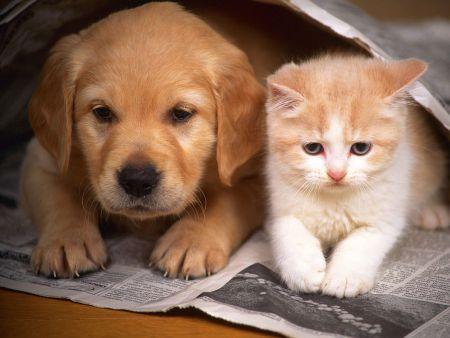 501465 dog urbano site de compras coletivas para caes e gatos 2 DogUrbano: site de compras coletivas para cães e gatos