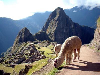 502943 Machu Picchu 000 Pacotes Réveillon Machu Picchu, Peru 2013