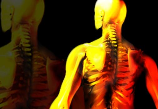 503368 Dieta do Mediterrâneo com azeite contribui com a proteção dos ossos 2 Dieta do Mediterrâneo com azeite contribui com a proteção dos ossos