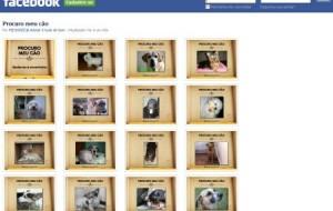 Sites que ajudam a encontrar cães perdidos