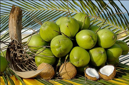 508093 O coco verde é um fruto rico em nutrientes essenciais para garantir a hidratação e beleza da pele facial Fotodivulgação. Máscara facial de coco verde: como fazer, benefícios