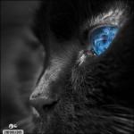 508230 gato com olho azul fotos 3 150x150 Gatos com olho azul, fotos