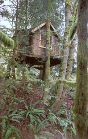 508318 arvore 11 Casa na árvore para crianças, modelos