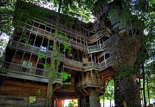 508528 casa da arvore fotos 2 Casa da árvore: fotos